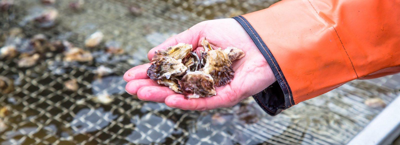Othniel Oysters
