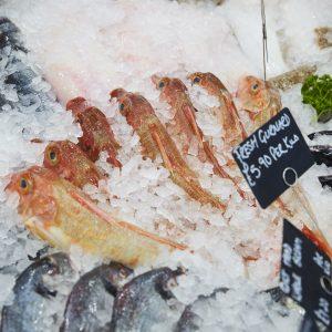 Dorset Aquaculture